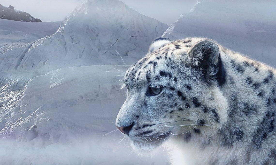 le leopard dans vos dressing